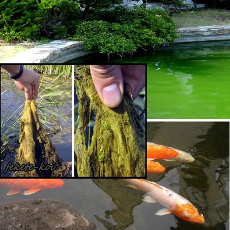 Osaga Fonalas algairtó szer  0,5Kg , 15m3 vízhez