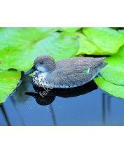 Úszó réce nőstény, 31 cm - Élethű madár figura - csalimadár