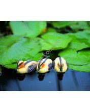 Úszó kiskacsa sárga, 12 cm / Élethű madár figura