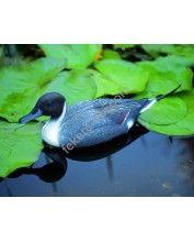Úszó nyílfarkú réce hím, 48 cm - Élethű madár figura - csalimadár
