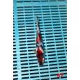 Kase Tenyészet Tosai Mix 18-22cm (K7)