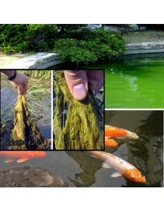 Bio algex fonalas algairtó és tófertőtlenítő 1Kg (50 m3 vízhez)