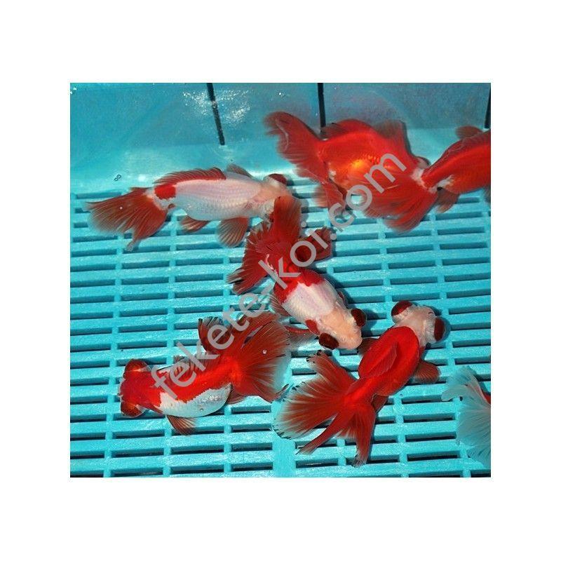 Prémium Moor mix Red/White 14/16 cm