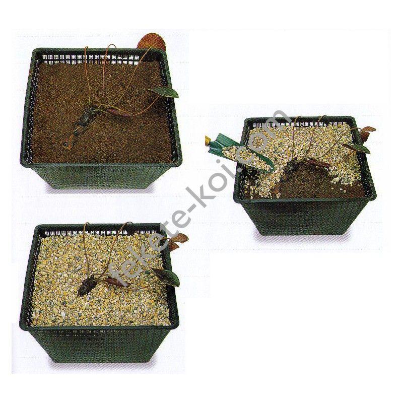 Tavirózsák ültetési tanácsa.