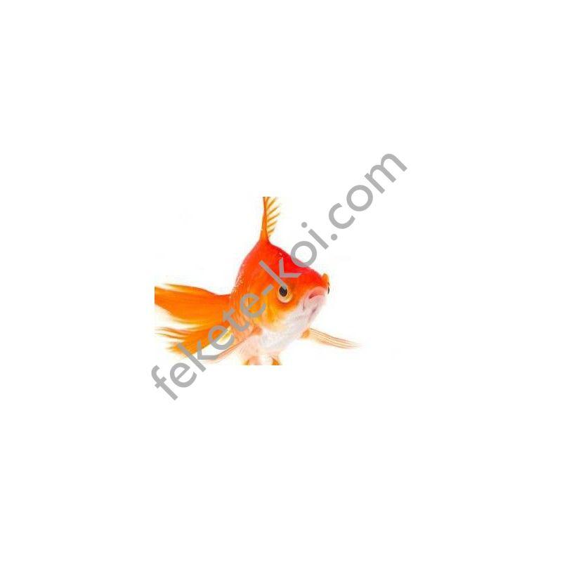 Tavi aranyhal piros 4-7cm