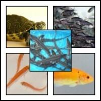 Egyéb tavi halak és élőlények