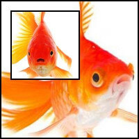 Piros aranyhal
